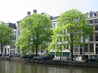 Ulmus hollandica Belgica (amsterdam) 040509
