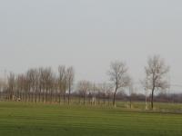 Ulmus hollandica Commelin (2x re) & Lobel (middelstum N996 delleweg) 100101