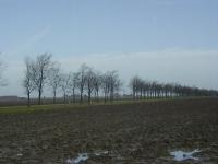 Ulmus hollandica Commelin (roodeschool klaas wiersumsweg) 980101