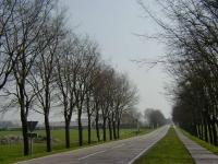 Ulmus hollandica Commelin (schagen N241 hoek N248) 020421